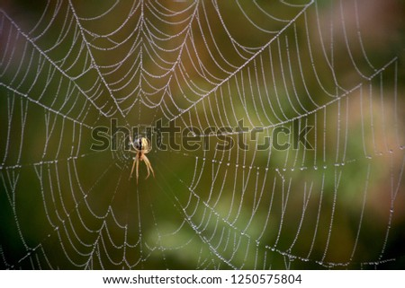 Spiders and spider web #1250575804