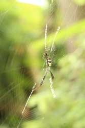 Spiders are air-breathing arthropods that have eight legs, chelicerae with fangs generally able to inject venom