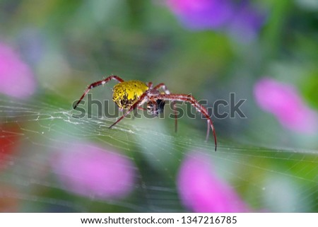 Spiders are book-like invertebrates (arthropods) #1347216785
