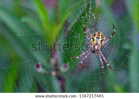 Spiders are book-like invertebrates (arthropods) #1347217445