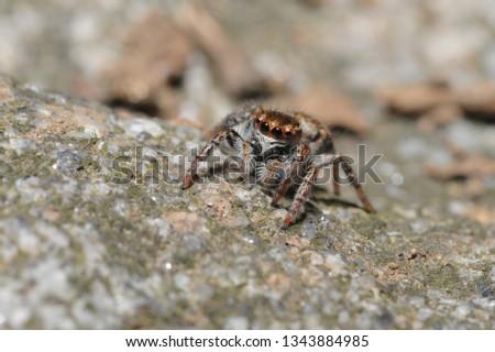 spiders of Korea #1343884985