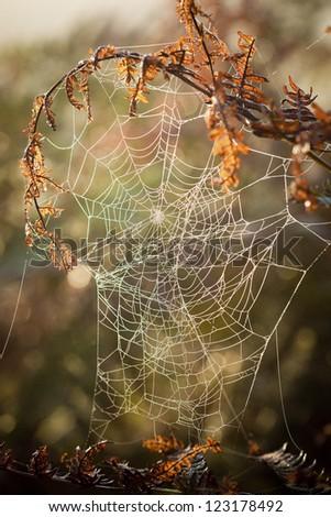 Spiders Web #123178492