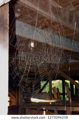 Spiders Web in Old Barn