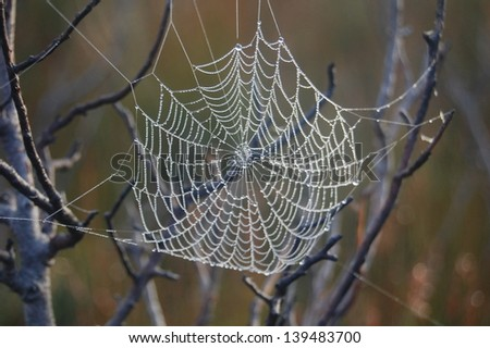 Spiders web with morning dew #139483700