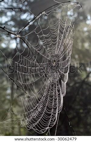 Spiderweb #30062479
