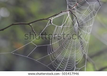 spiderweb #501417946