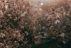 Spiderweb and sunshine, sunlight, sun rays and cob web, plants and grass, flora