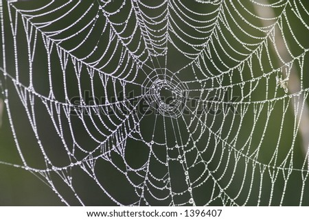 Spiderweb covered by Dew Drops.
