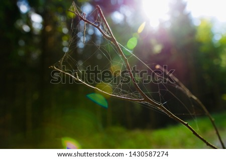 Spiderweb covering twigs and the sun shining through. #1430587274