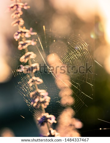 Spiderweb glistening in the sunlight