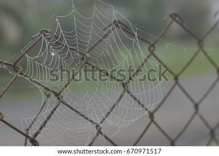 Spiderweb photo for your outdoor projects or arachnid publications. #670971517