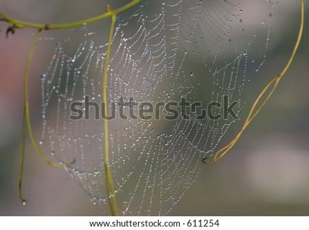 Spiderweb con rocío.