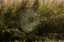spiderweb with dewdrops in the morning mist