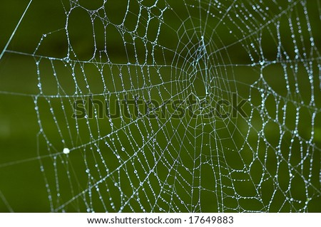 spiderweb with drop of dew