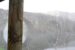 Spiderweb with drops of water with a bridge over a river in the background