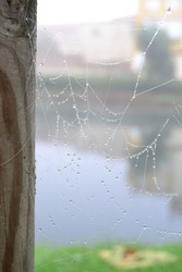 Spiderweb with drops of water with a river as background