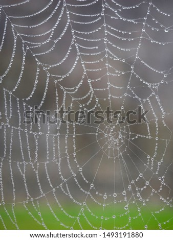 Spiderweb with morning dew drops #1493191880