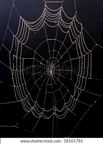 Spiderweb with morning dew isolated on black background
