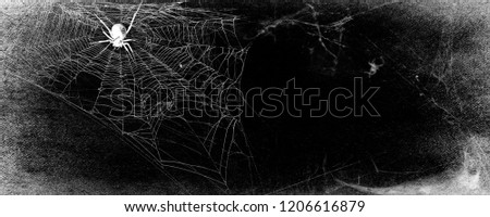 Spiderweb with spider isolated on black grunge background. Halloween party panoramic black and white illustration. Texture of cobweb. Horror, scary Halloween decoration. Copy space. Gothic style
