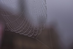 Spiderweb with waterdrops in the morning in Ulm Germany