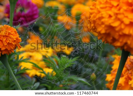 Spidery web with water drops on flowers