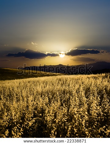 spike cereal in backlight, silhoutte of hill to sunset