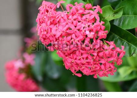 Free photos pink spike flower avopix spike flower pink flower spike and green leaves spike flower in the garden with mightylinksfo