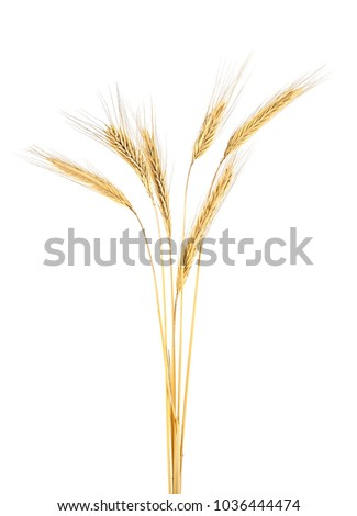 Spike of rye on a white background #1036444474