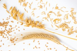 Spike of wheat and wheat grains. Ears of oats and oat grains. Top view. White background