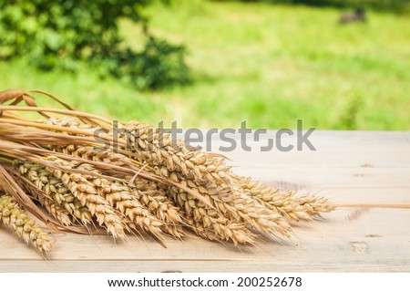 spikelets of wheat on table