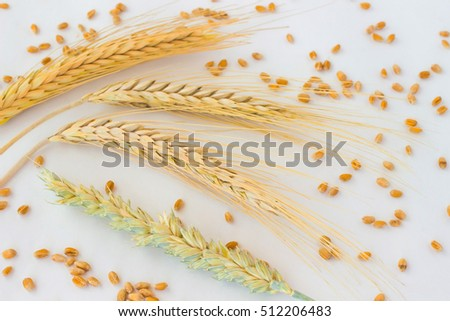 spikes of wheat and grain on the white background.  Top view. Close up