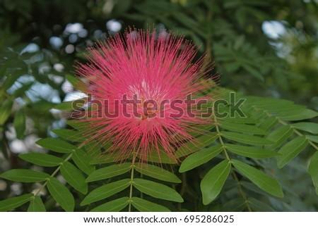 Free photos pink spiky flower avopix spiky pink flower 695286025 mightylinksfo