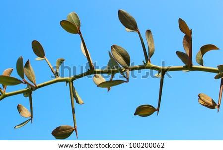 Spiky tree branch on blue background