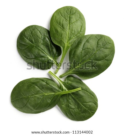 spinach baby leaves - stock photo