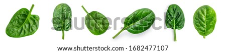 Spinach leaf isolated on white background. Fresh green baby spinach Top view. Flat lay. Сток-фото ©