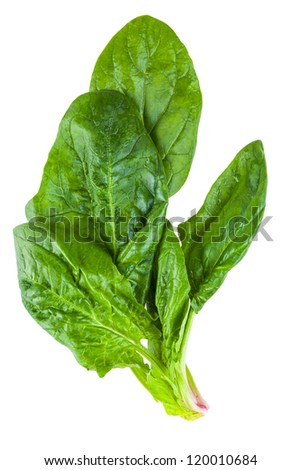 spinach leaves isolated on white background