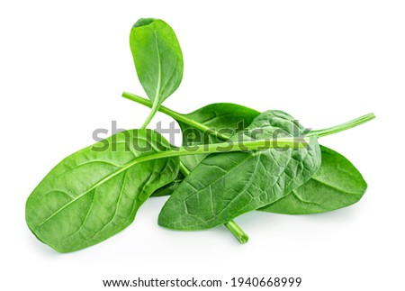 Spinach leaves isolated on white background. Various Spinach leaf  Сток-фото ©