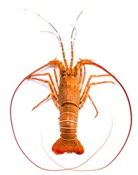 Spiny Lobster isolated on white background, Boiled Spiny Lobsters Asia Seafood in white background.