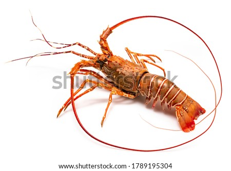 Photo of  Spiny Lobster isolated on white background, Boiled Spiny Lobsters Asia Seafood in white background,