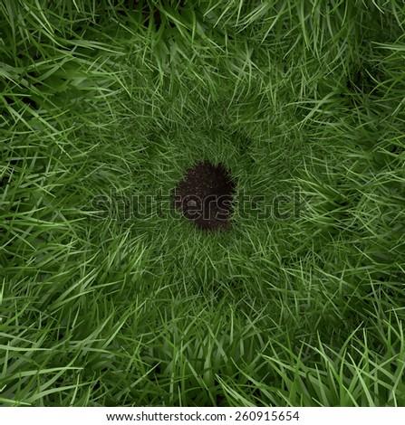 Spiral green grass rabbit hole