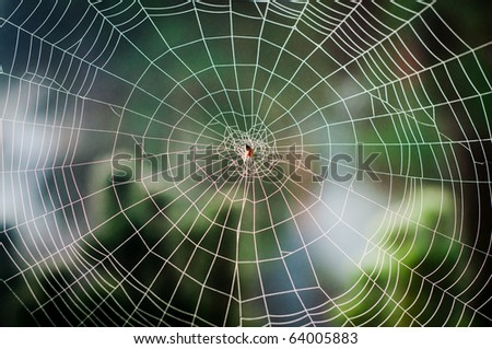 Spiral orb web in focus with spider in the center #64005883