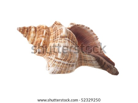 Spiral Sea Shell Isolated on White Background