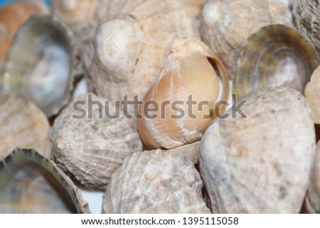 spiral sea shells and limpet shells