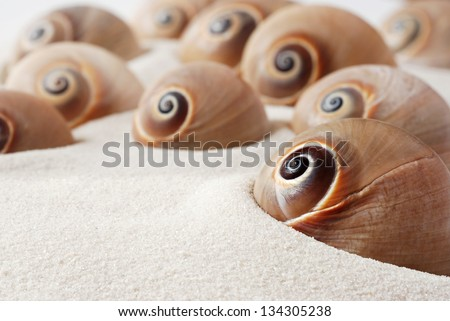Spiral snail seashells on white sand with copy space.  Macro with shallow dof.