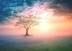 Spiritual healing concept: Silhouette alone tree on beautiful meadow wallpaper background