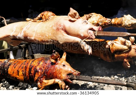 Spit roasted pigs cooked over hot coals