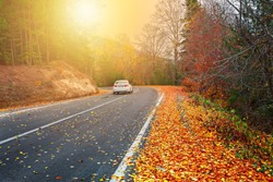 Splendid image in the forest colored leaves, asphalt road. İstanbul, Bursa, Turkey.