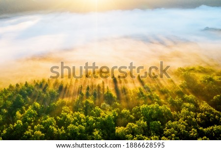 Splendid misty view of tree tops with the rays of morning light. Location place Dniester canyon of Ukraine, Europe. Aerial photography, drone shot. Photo wallpaper. Discover the beauty of earth. Foto stock ©