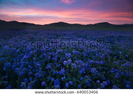 Splendid Sunrise Over the Carrizo Plain