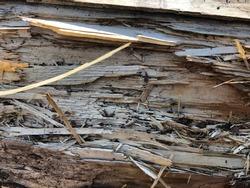 Splintered trunk of a tree. Splintered wood.
